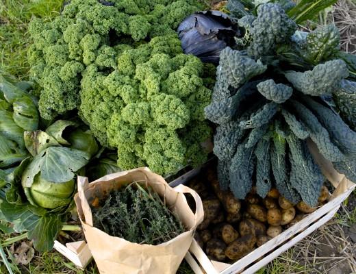 Køkkenhave blog