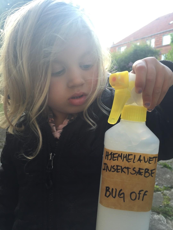 Hjemmelavet insektsæbe mod bladlus