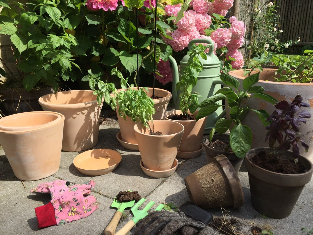 Køkkenhave i potter