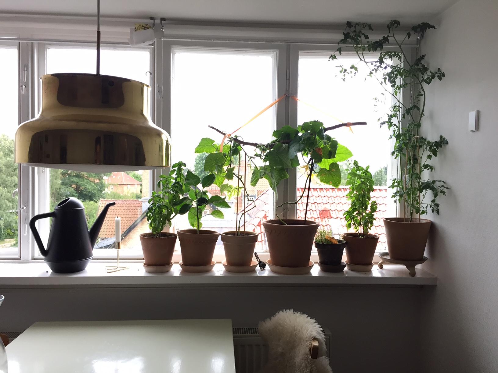 Køkkenhave i krukker