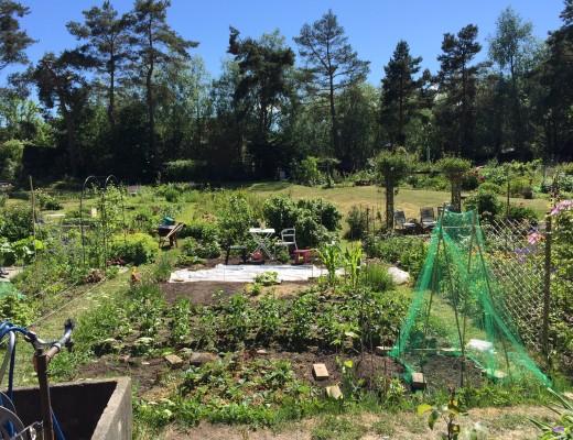 Planlægning af køkkenhave