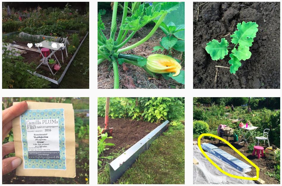 Planlægning af køkkenhave - se mit sneglehegn på Instagram