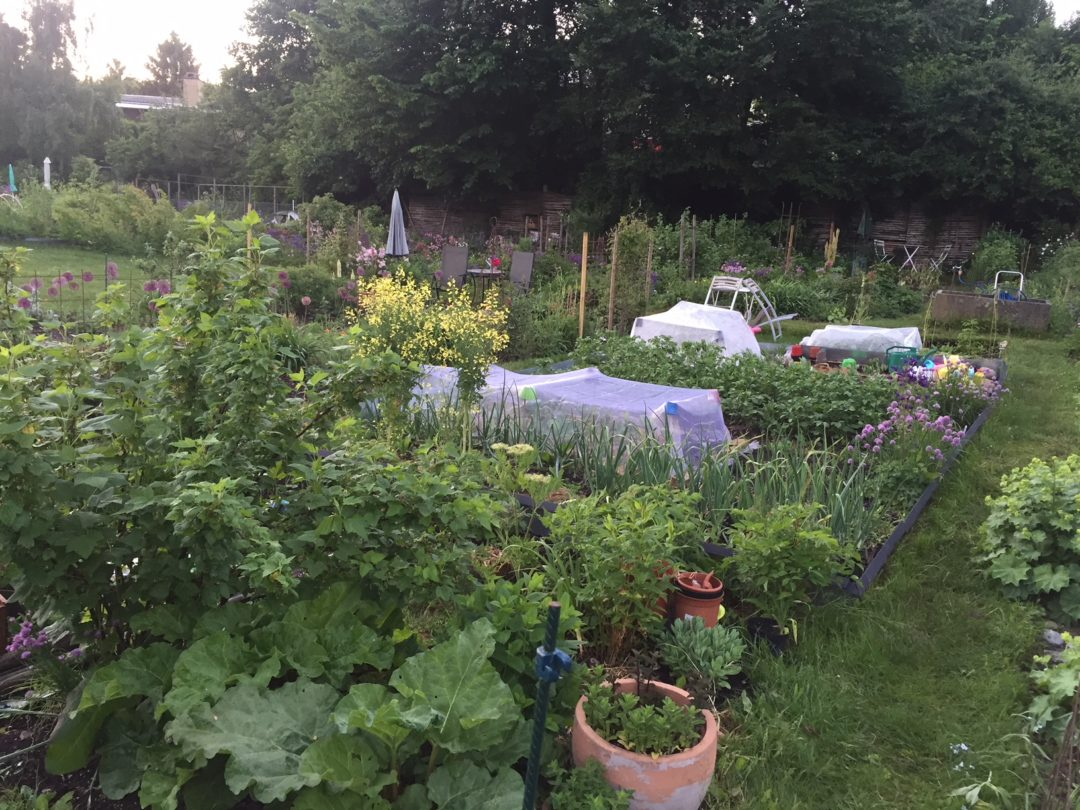 Min køkkenhave