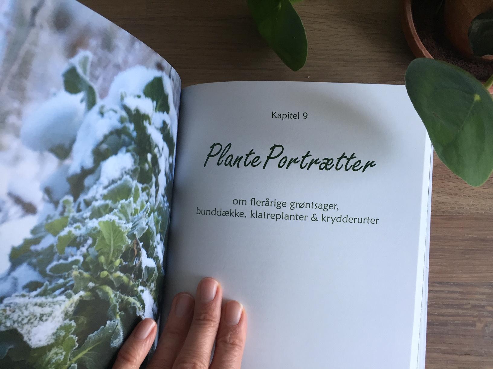 Permakulturhaven - flerårige grøntsager