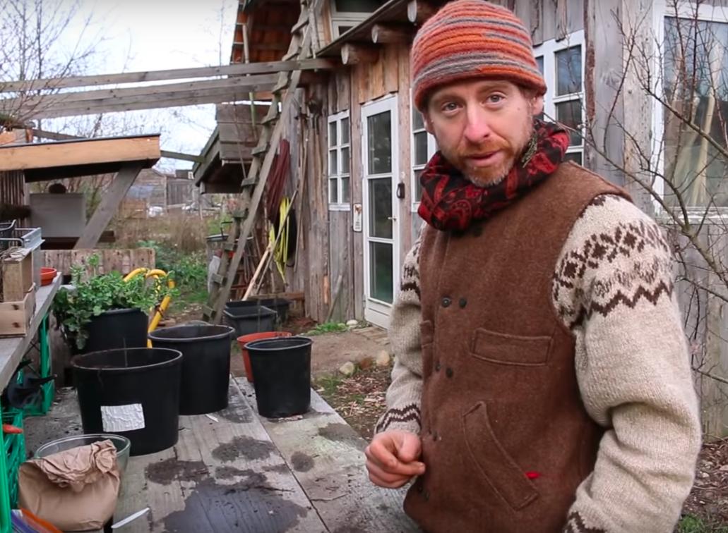 Permakulturhaven - flerårige grøntsager fra frø